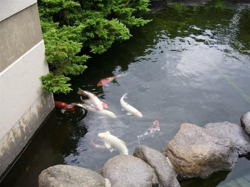 湯の幸露天隣の池.jpg